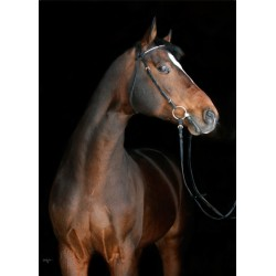 horse browns